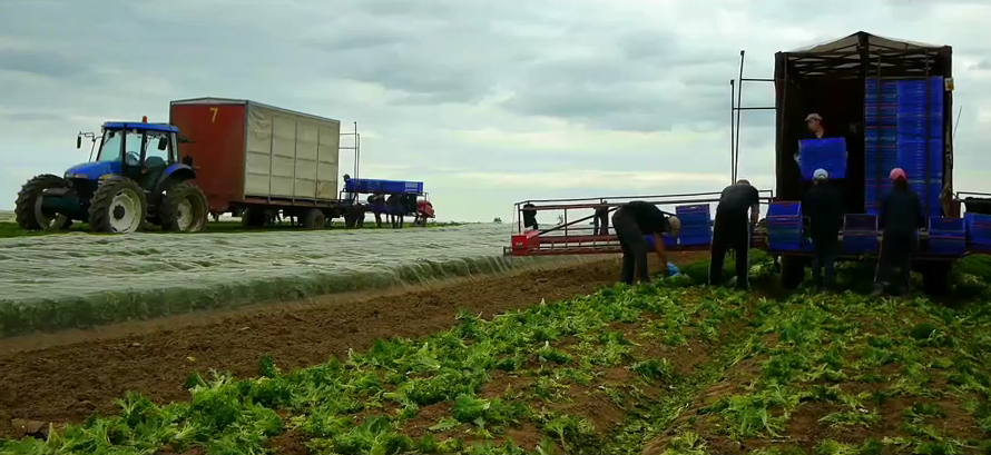 农场宣传片 机械化收获蔬菜 现代化绿色农场 无污染 实拍视频素材