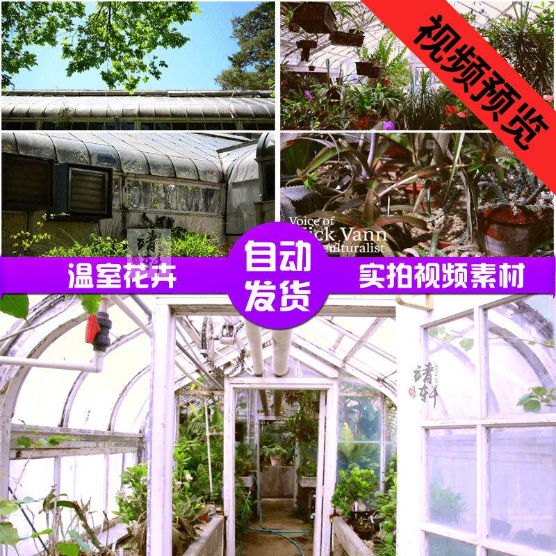 温室花卉盆 栽植物种植园宣传片 养花场景 花卉高清实拍视频素材