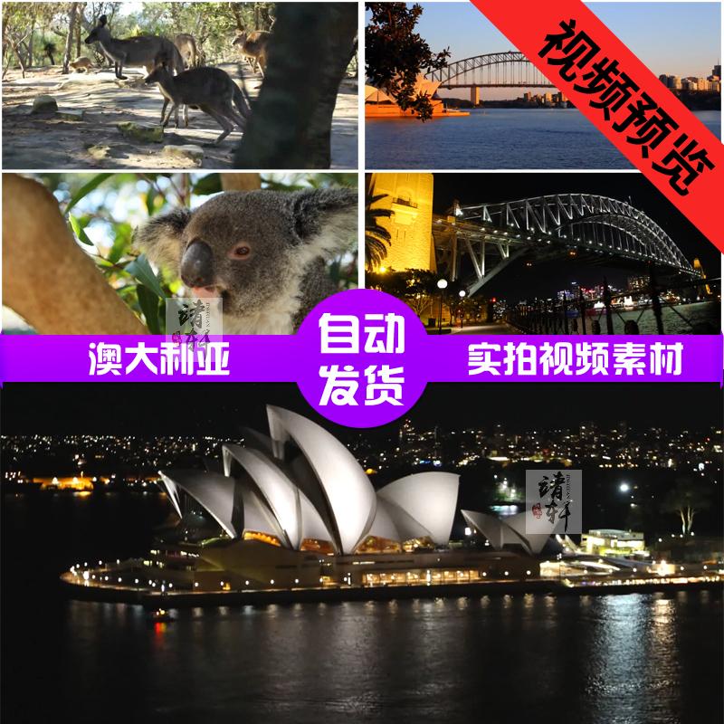 澳大利亚自然风光动物旅游形象片 袋鼠考拉悉尼高清实拍视频素材