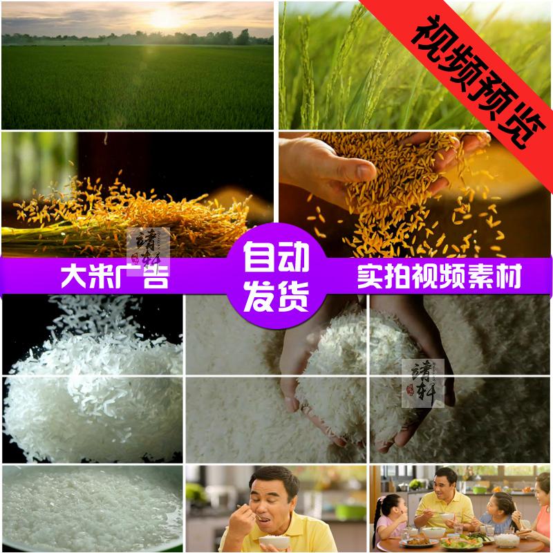 绿色环保大米广告片稻田稻谷手捧米粒有机农业 高清实拍视频素材