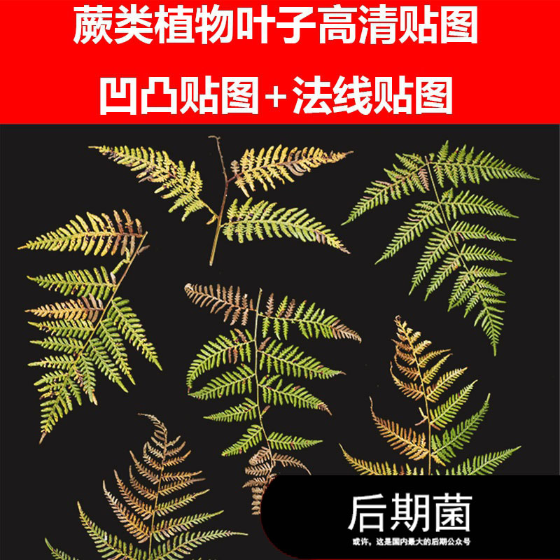 JPEG 蕨类植物灌木树木树林叶子高清 凹凸 法线贴图材质三维