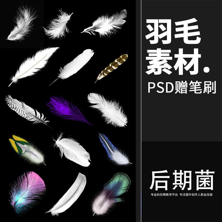 唯美羽毛鸟羽漂浮散落透明效果背景PSD模板设计素材影楼后期