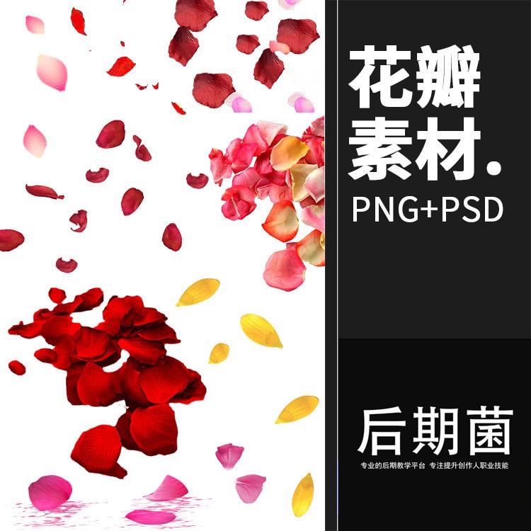 玫瑰花瓣PNG免扣素材真实飘落飘洒散落效果叶子婚纱照PS后期