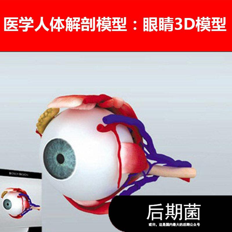 非实物 MAX 医学人体人物角色器官解剖眼睛眼球模型三维素材
