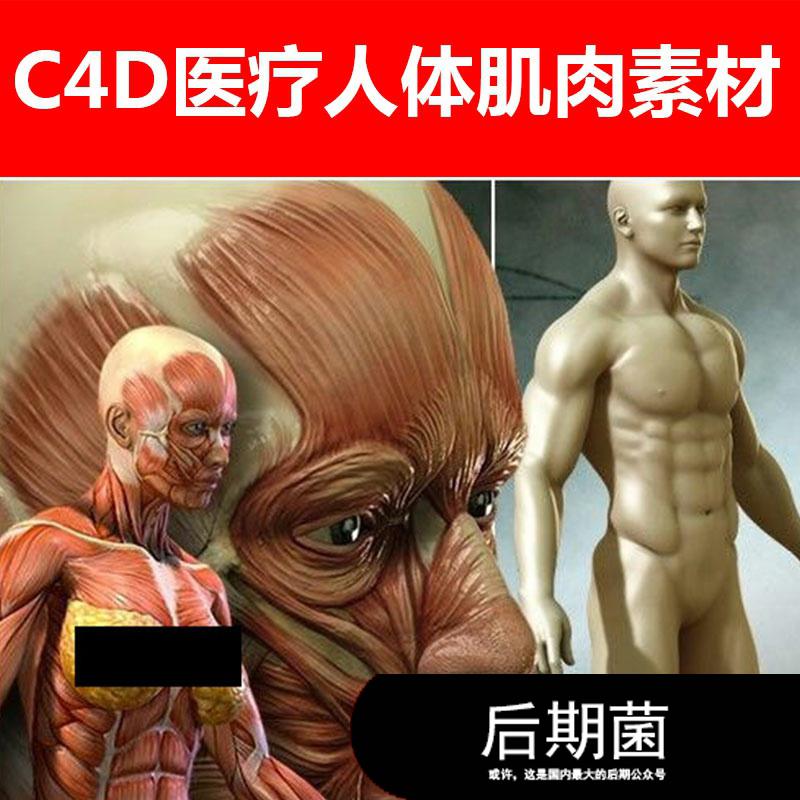 Poser Daz3d studio 医疗男女人体人物肌肉渲染材质贴图素材